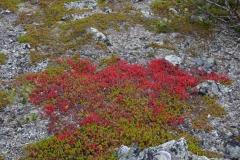 Vorboten-des-Herbstes