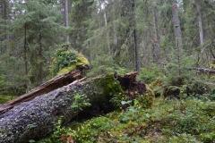 Was liegt, liegt: Zurück zum Urwald.