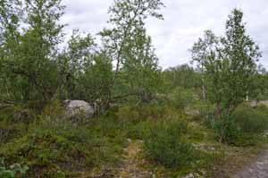 Wald im Norden