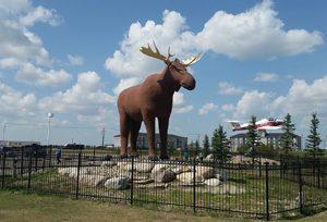 Mac The Moose