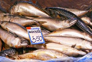 Makrele