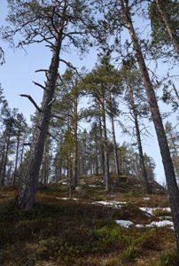 Bäume Finnland