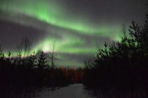Nordlicht im Wald