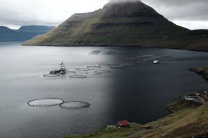 Fuglafjørður, Eysturoy, mit Aquakultur
