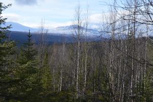 Wald Kvikkjokk